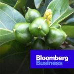 01. Bloomberg