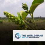 03. Banco mundial